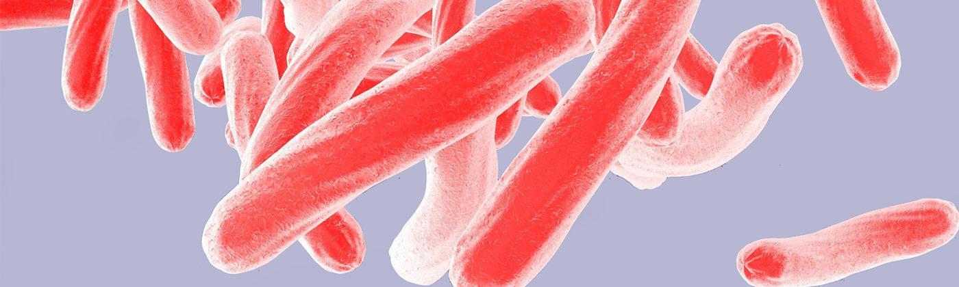 Tuberculosis TB Education